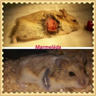 ♥ Marmeládka hledá milující domov ♥